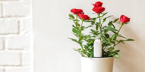 Xiaomi Smart Flower and Plant Monitor (Huahuacaocao): Фото 5